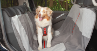 Seat Covers Target Friends With Paws