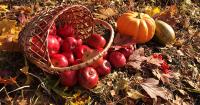 Seasonal Harvest Fairs Dot Our American Landscape