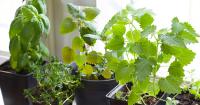 Indoor Herb Garden Adds Flavorful Touch